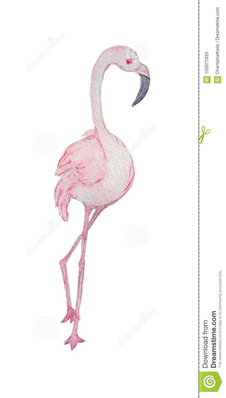 medium resolution of decorative watercolor flamingo bird clipart design element can be used for cards invitations banners posters print design exotic tropical background