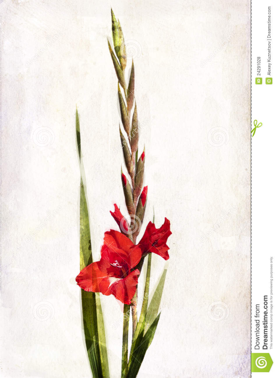Watercolor Red Gladiolus Royalty Free Stock Photos Image