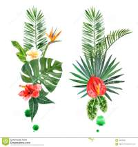 Watercolor Tropical Plants For Your Designs Stock Vector ...