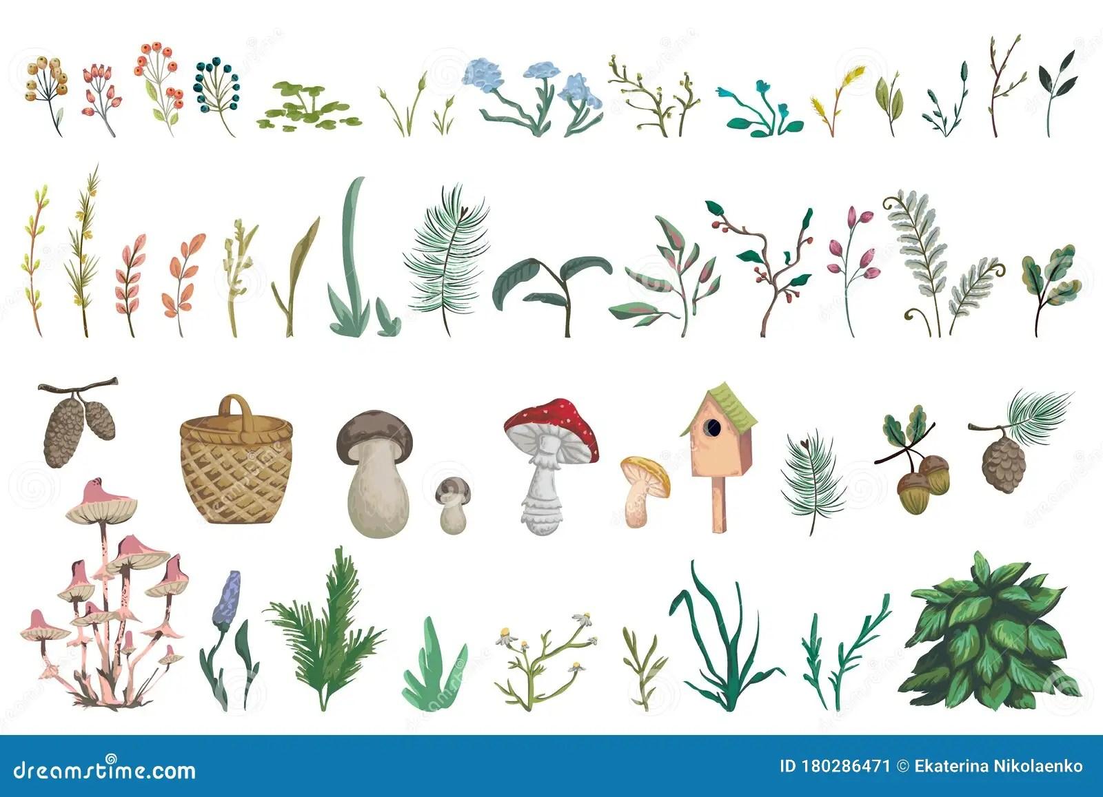 63047 bushes clip art images on gograph. Forest Plants Stock Illustrations 45 319 Forest Plants Stock Illustrations Vectors Clipart Dreamstime