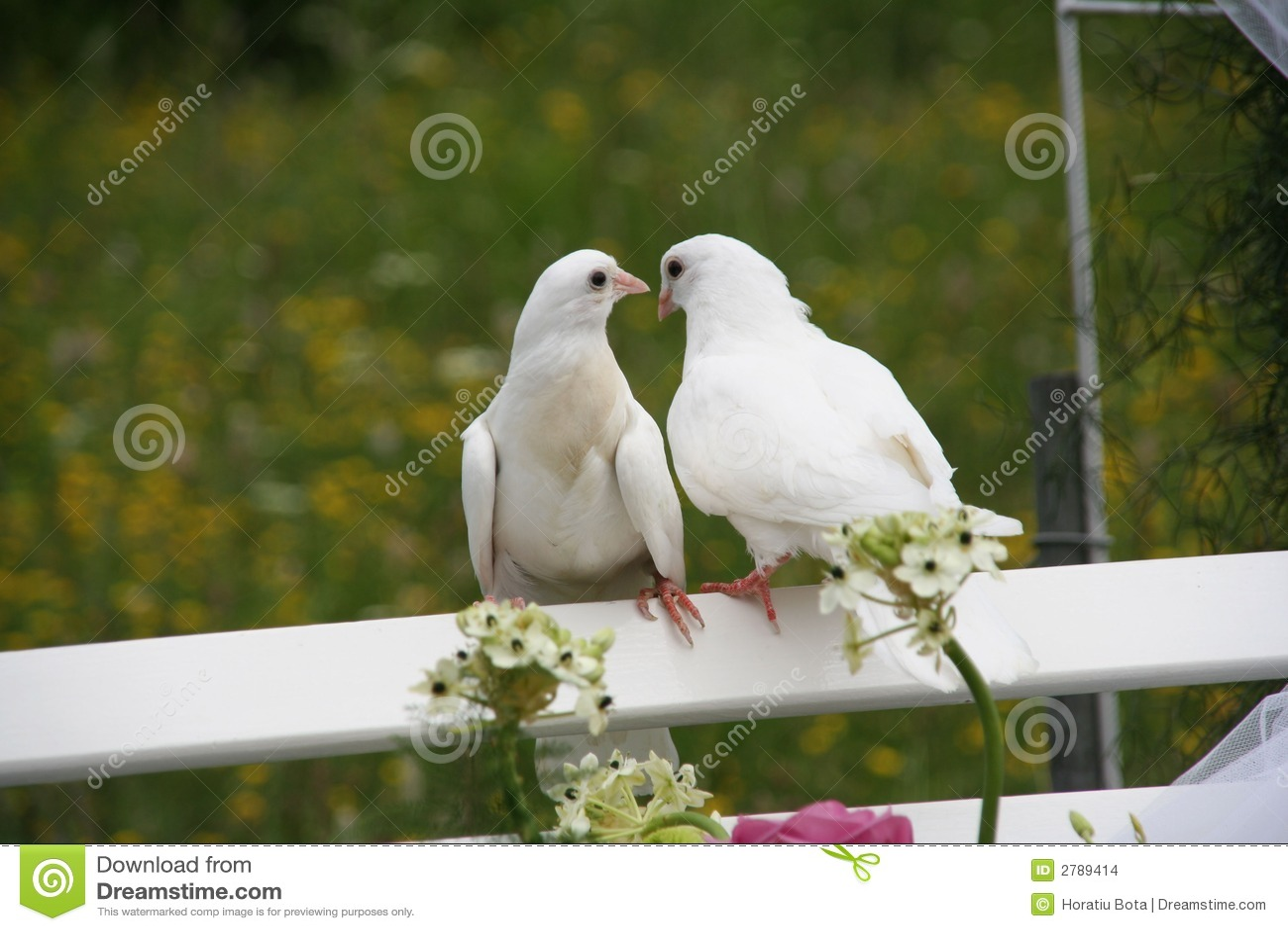 Wedding doves stock photo Image of decision marriage