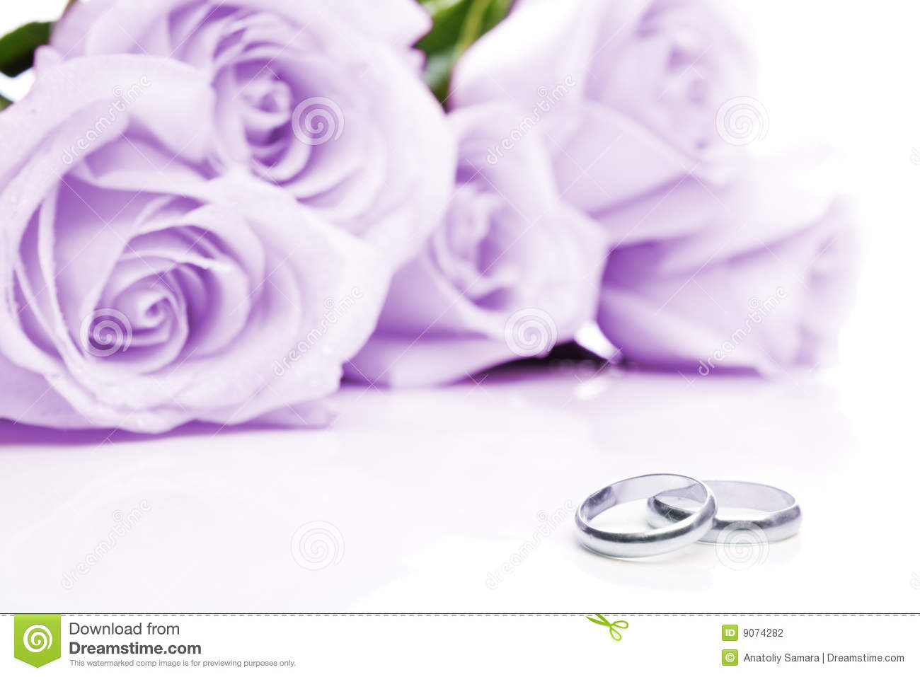 Wedding rings and roses stock photo Image of invitation