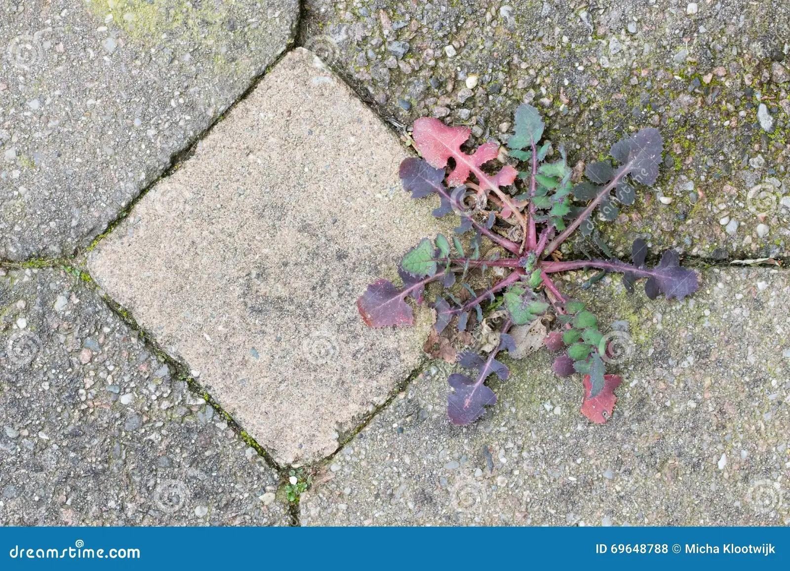 Weed Growing In The Cracks Between Patio Stones Stock