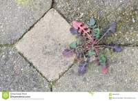 Weed Growing In The Cracks Between Patio Stones Stock