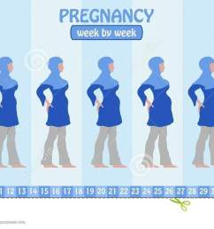 week by week pregnancy stages of pregnant muslim woman with islamic clothing all the objects and body stages are in different layers and the text types do  [ 1300 x 652 Pixel ]