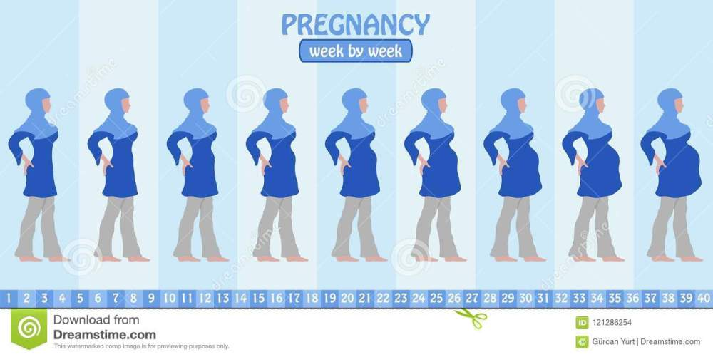 medium resolution of week by week pregnancy stages of pregnant muslim woman with islamic clothing all the objects and body stages are in different layers and the text types do