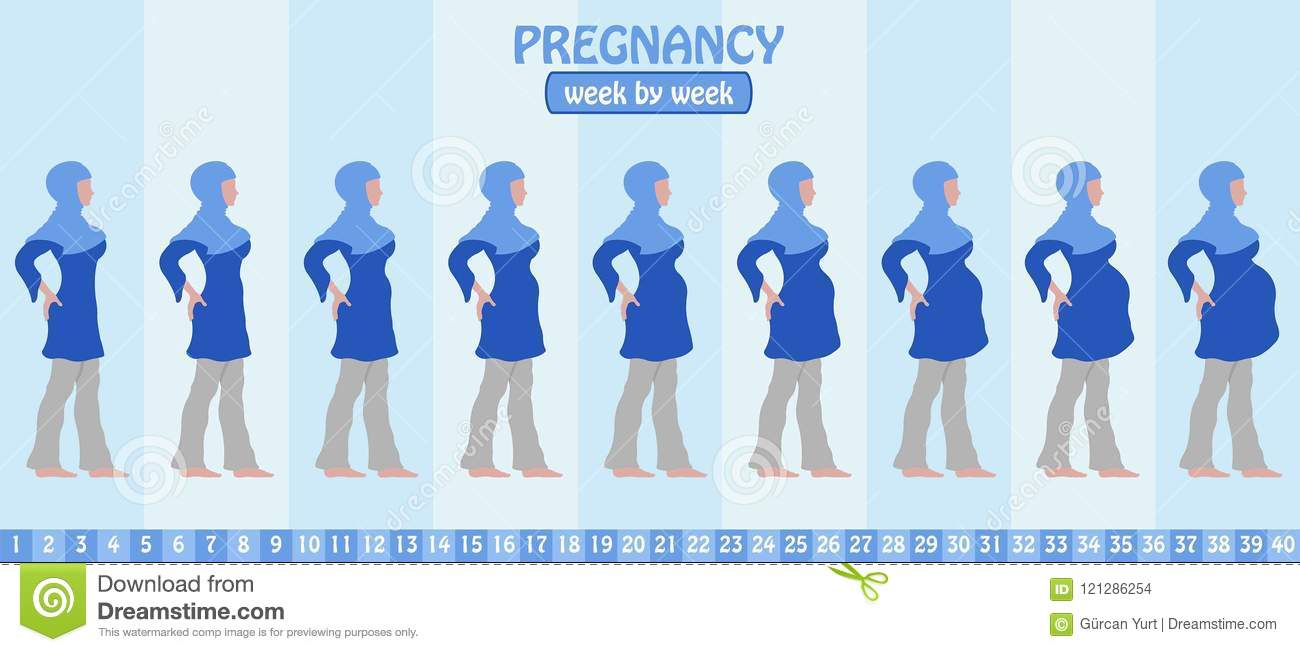 hight resolution of week by week pregnancy stages of pregnant muslim woman with islamic clothing all the objects and body stages are in different layers and the text types do