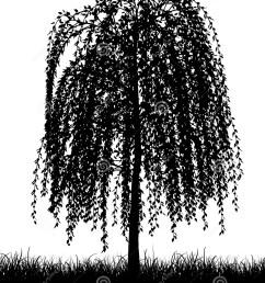 weeping willow tree [ 1199 x 1300 Pixel ]