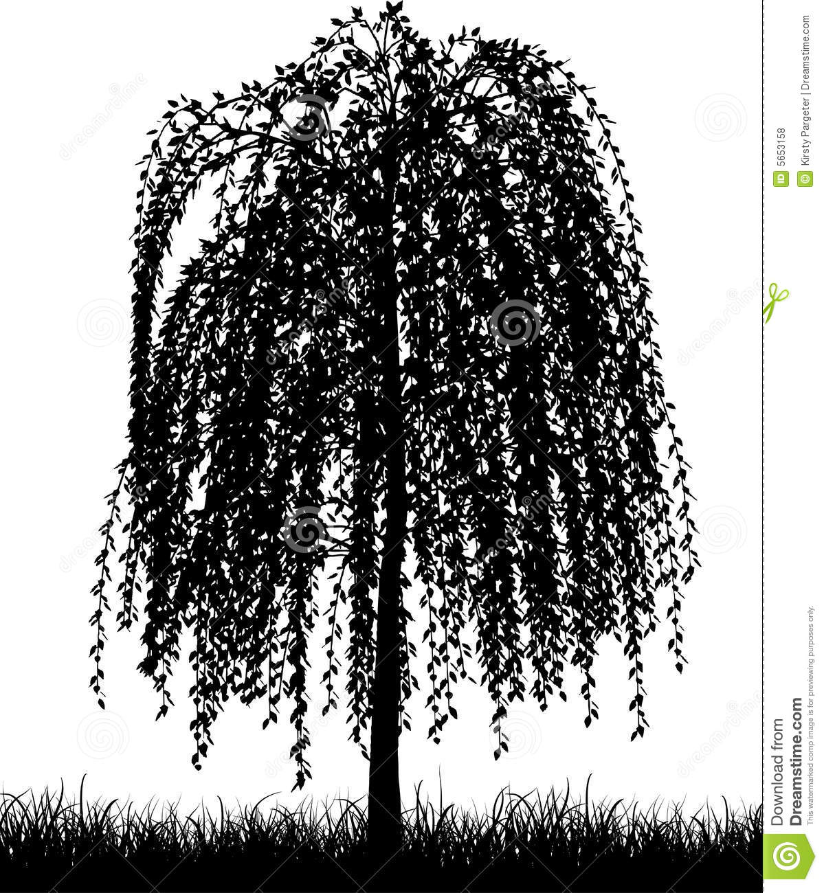 hight resolution of weeping willow tree