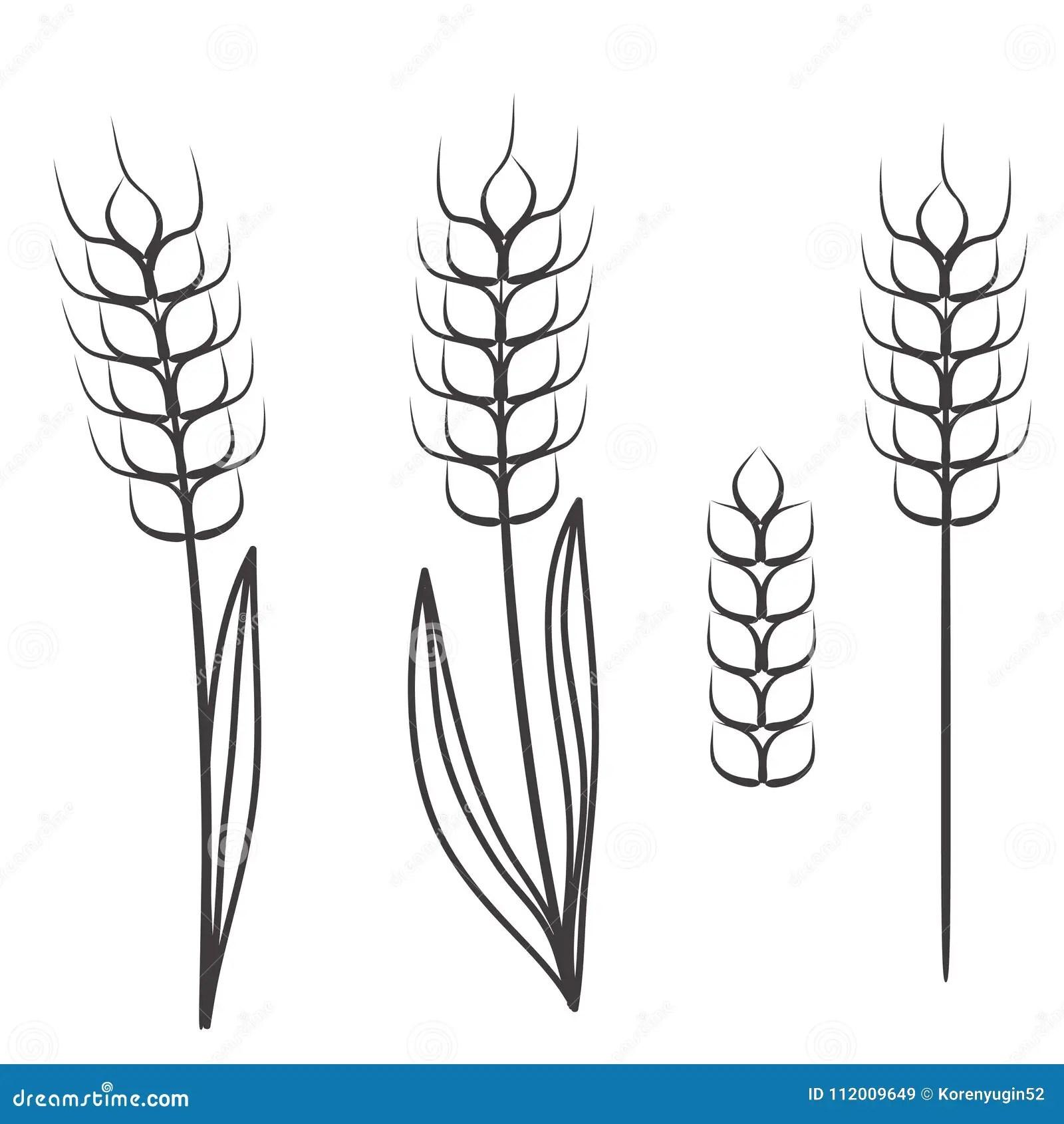 Oat Grain