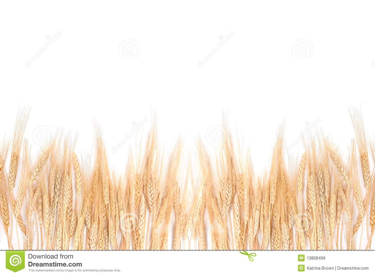 Fall Harvest Wallpaper Images Wheat Grass Bordering On A White Background Stock Image
