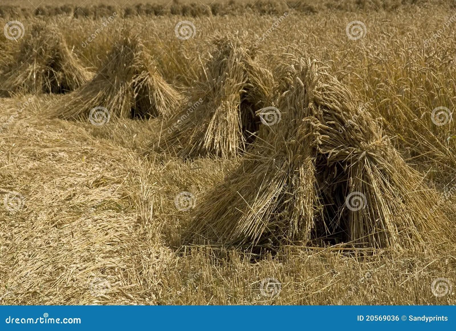wheat sheaves in a