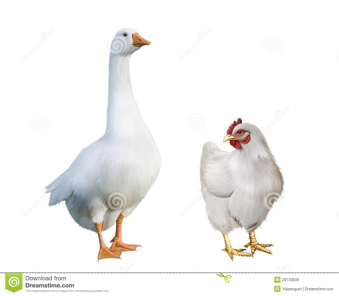White Goose And White Chicken Stock Image