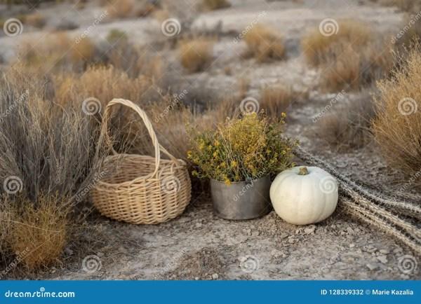 white pumpkin in rustic autumn