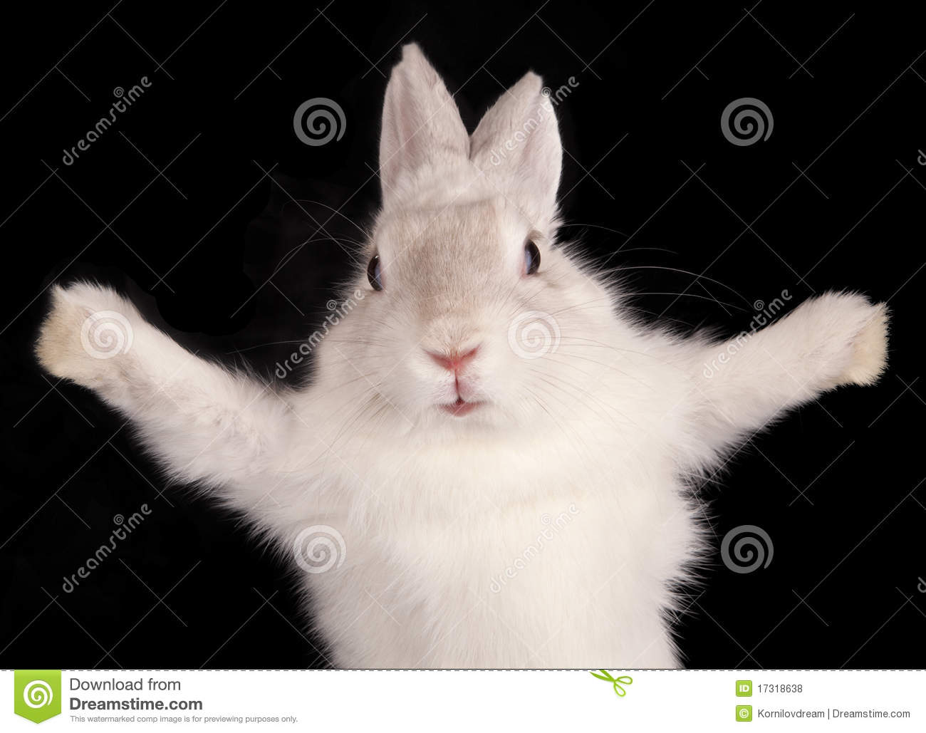 White Rabbit With Open Pads Stock Photo