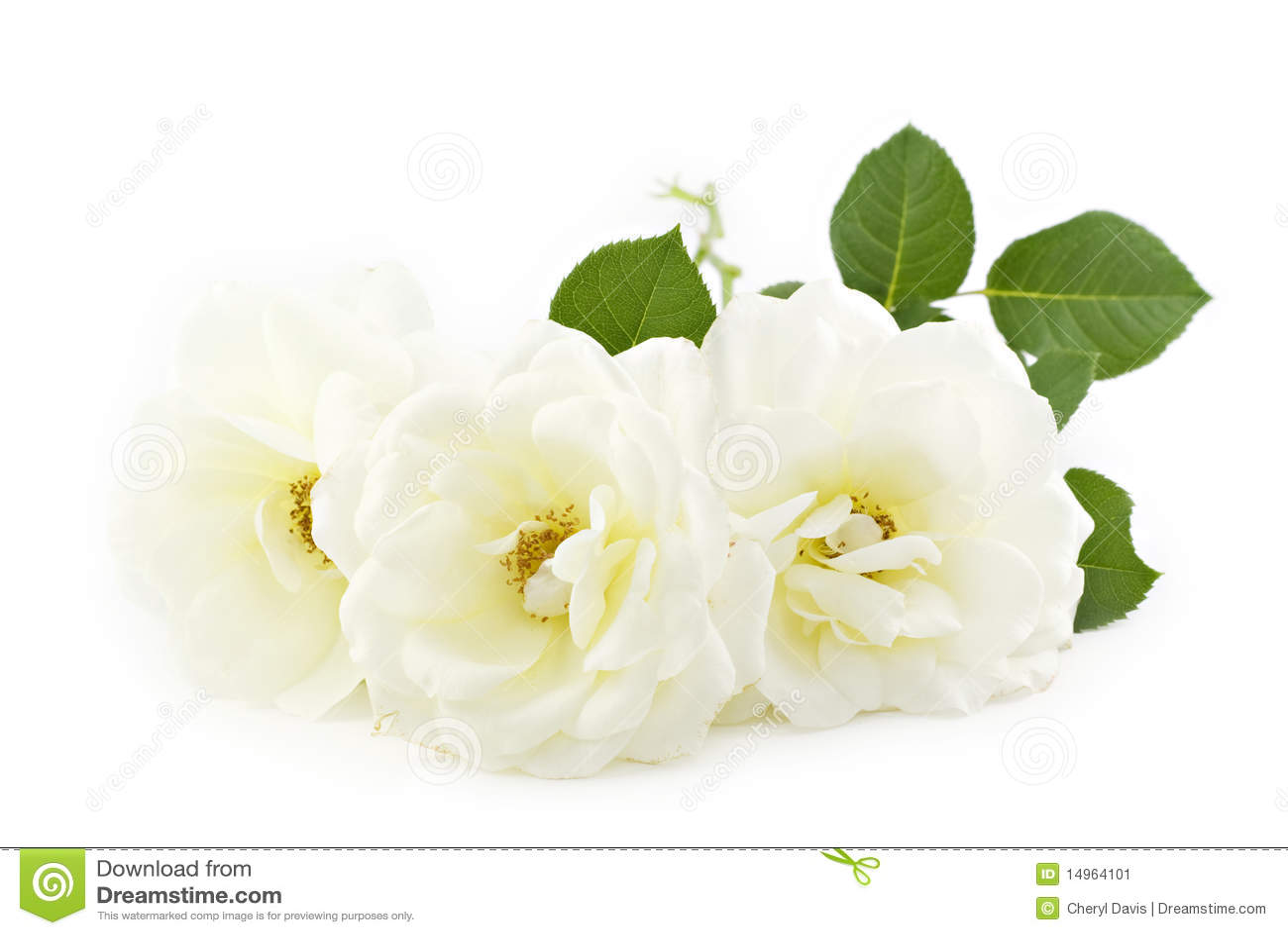 White Roses White Background Stock Image  Image 14964101