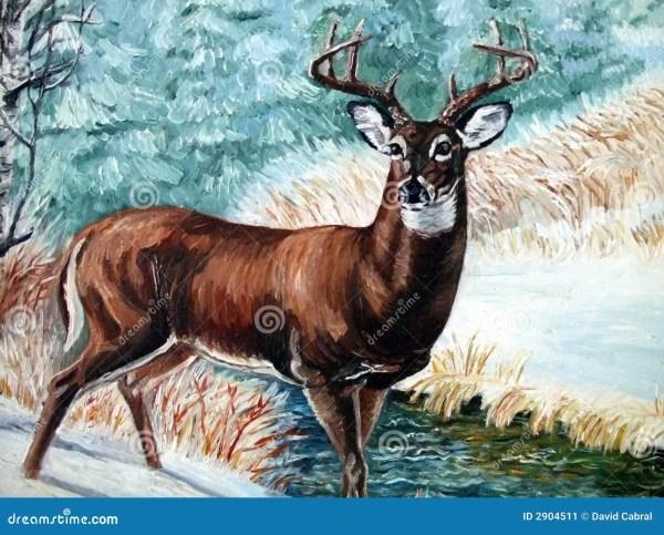 Whitetail- Buck Stock - 2904511