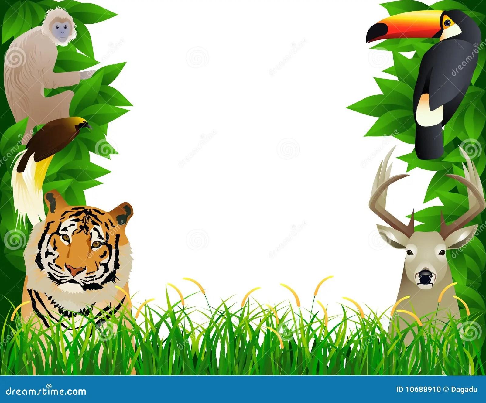 wild animal frame stock