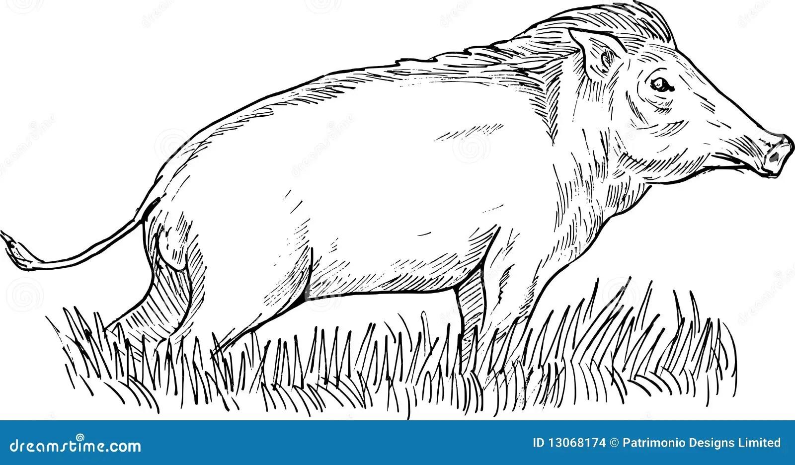 Wild Boar Or Pig Hog Razorback Stock Images