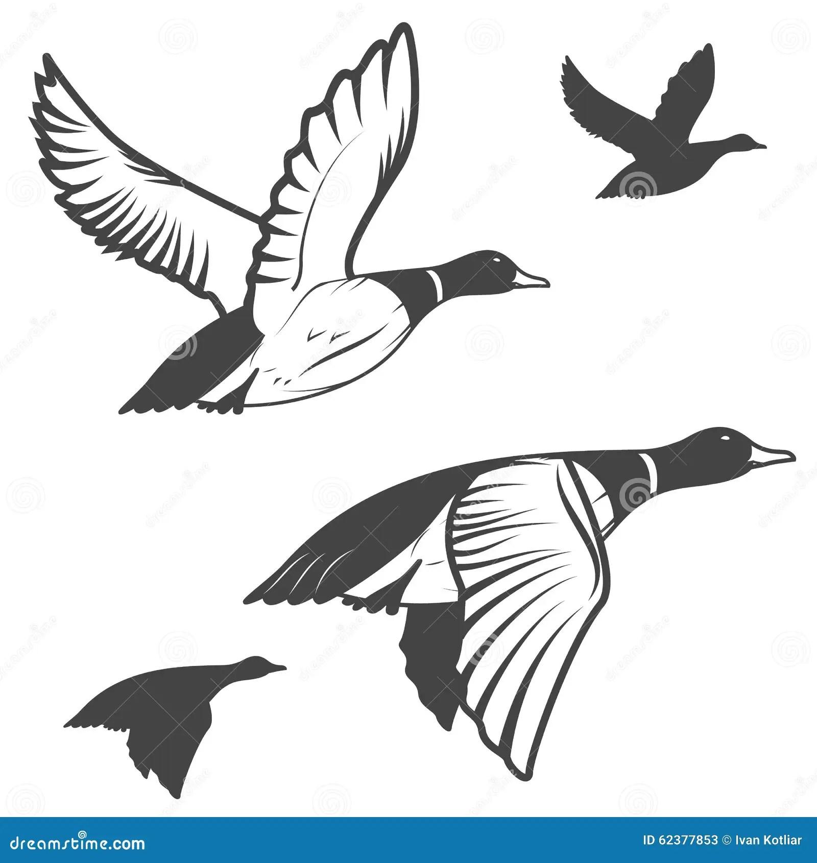 Wild Duck Stock Vector