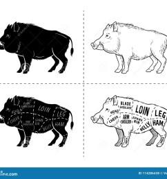 wild hog boar game meat cut diagram scheme elements set on wild boar meat cuts diagram logo [ 1300 x 1144 Pixel ]