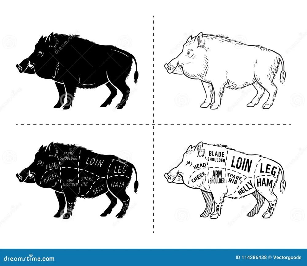 medium resolution of wild hog boar game meat cut diagram scheme elements set on wild boar meat cuts diagram logo