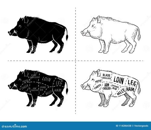 small resolution of wild hog boar game meat cut diagram scheme elements set on wild boar meat cuts diagram logo