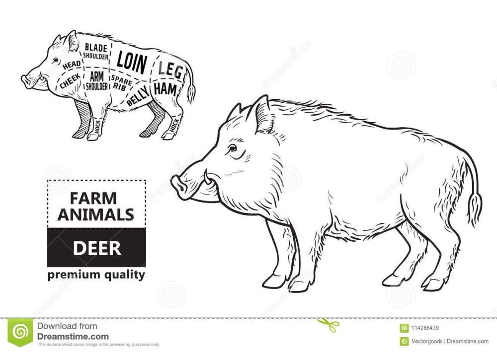 medium resolution of wild hog boar game meat cut diagram scheme elements set on chalkboard