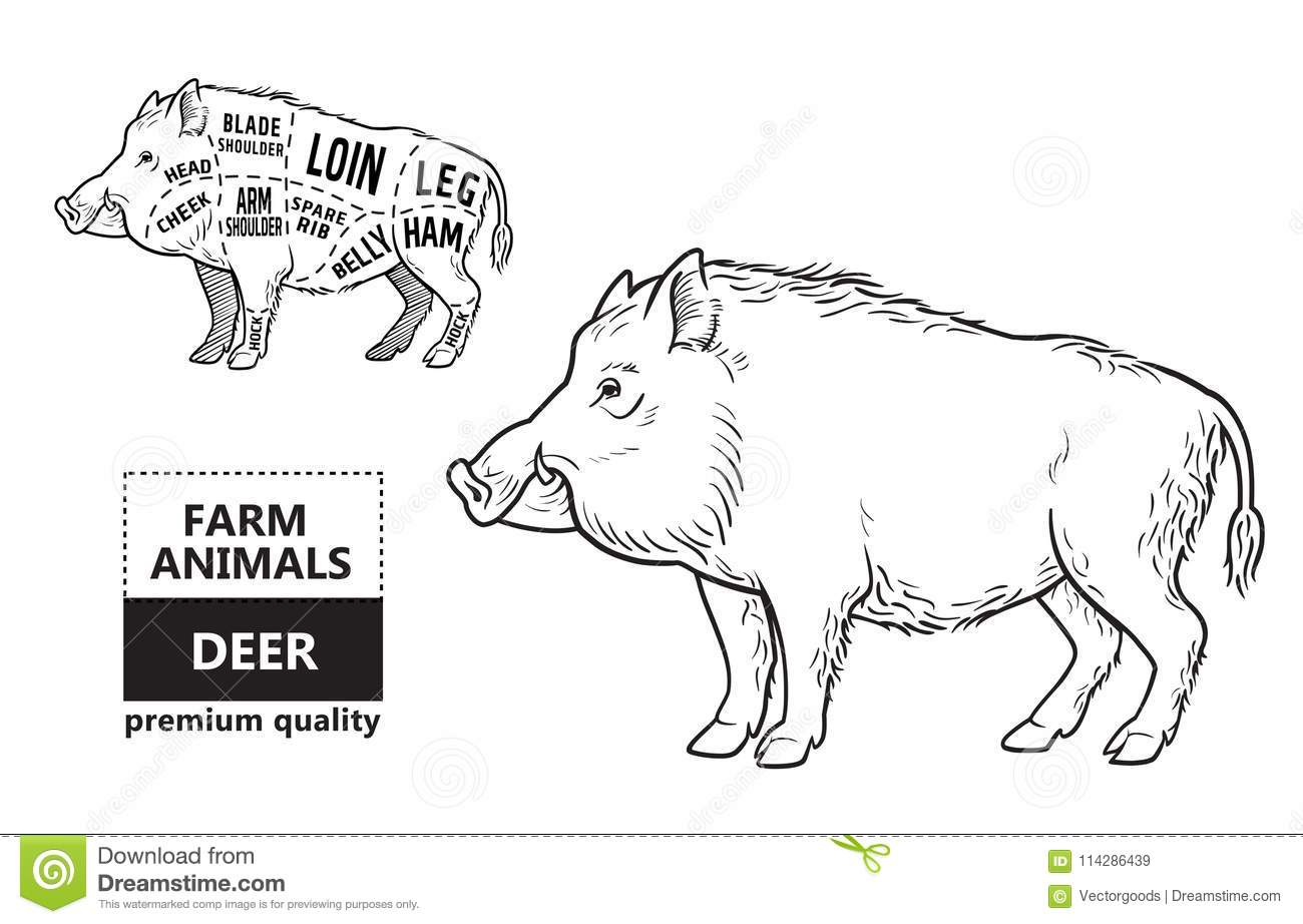 hight resolution of wild hog boar game meat cut diagram scheme elements set on chalkboard