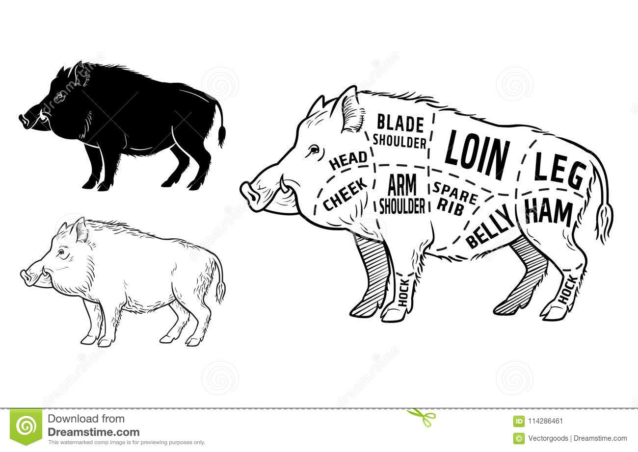 Wild Boar Cartoons Illustrations Amp Vector Stock Images