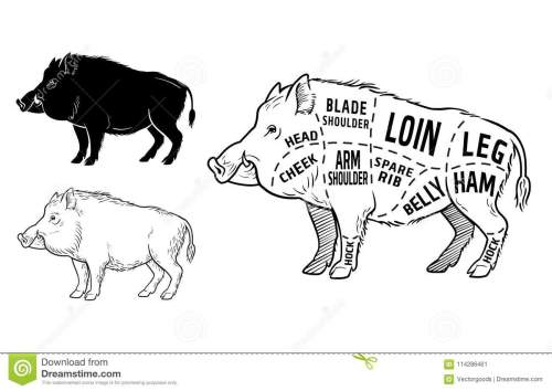 small resolution of wild hog boar game meat cut diagram scheme elements set on chalkboard