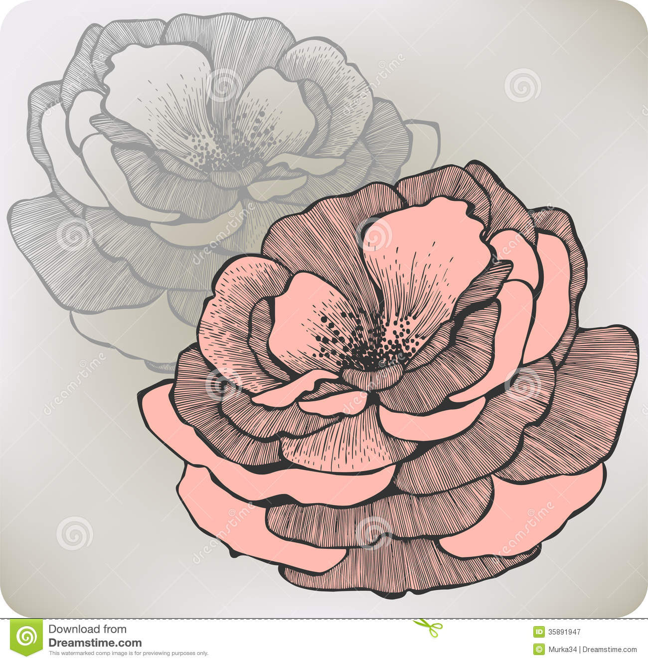 Wild Rose Flower Hand Drawing Vector Illustratio Royalty