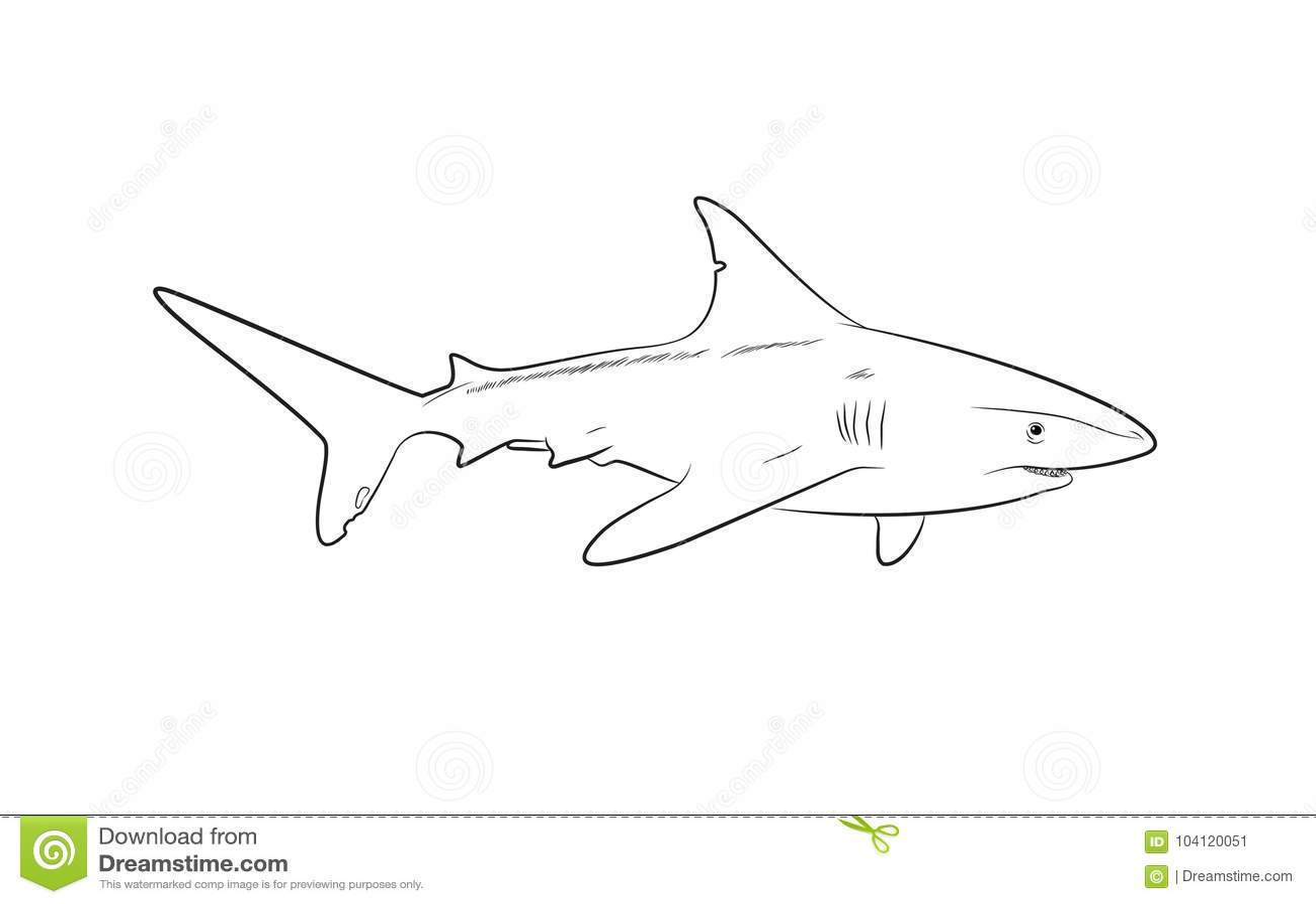 Wild Shark Drawing Vector Illustration Stock Vector
