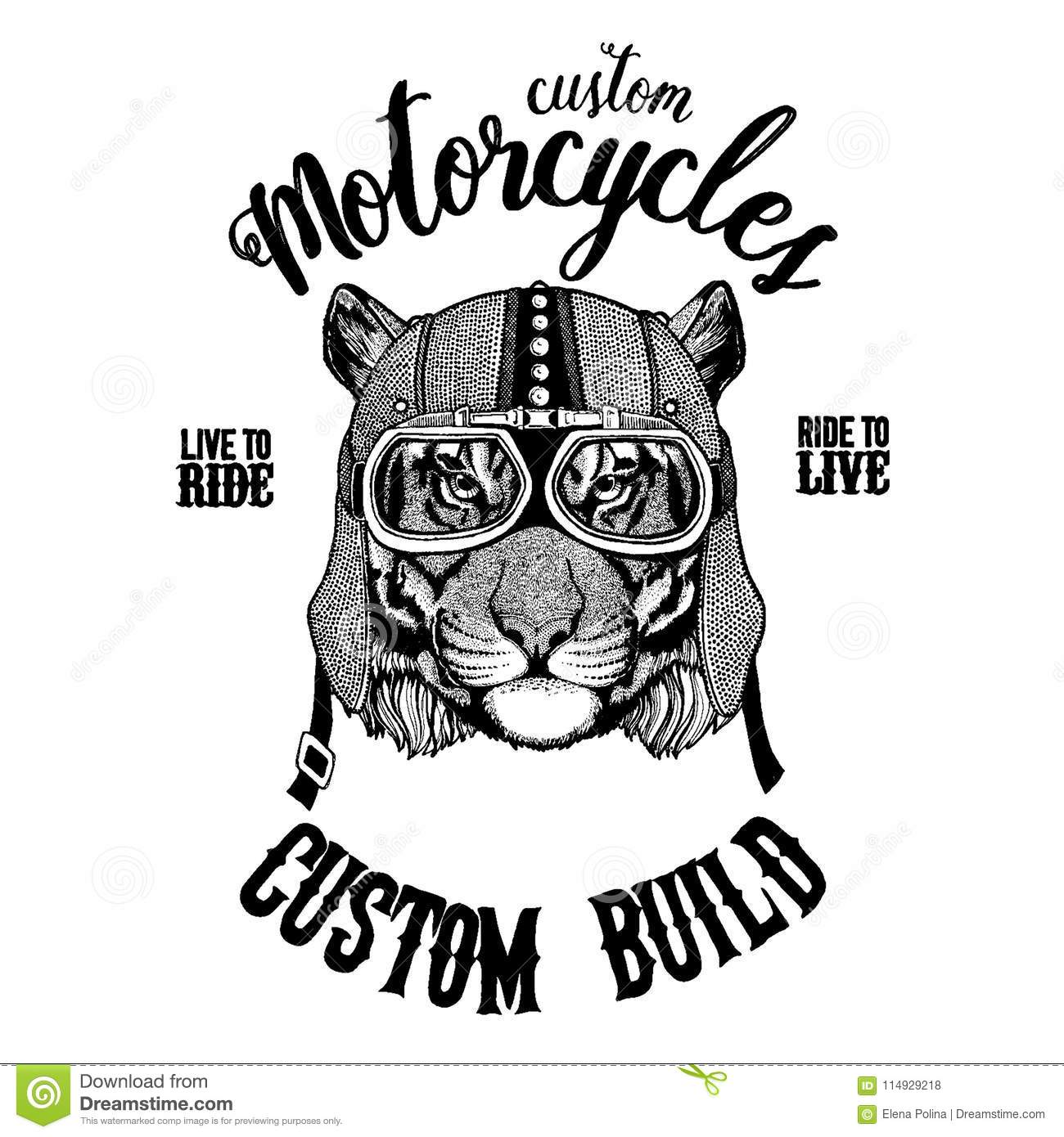 Wild Tiger Biker Motorcycle Animal Hand Drawn Image For