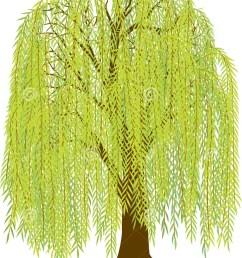 willow tree [ 1064 x 1300 Pixel ]