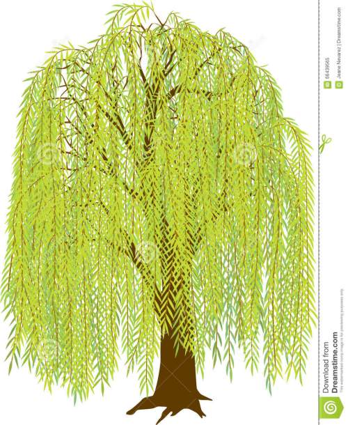 small resolution of willow tree