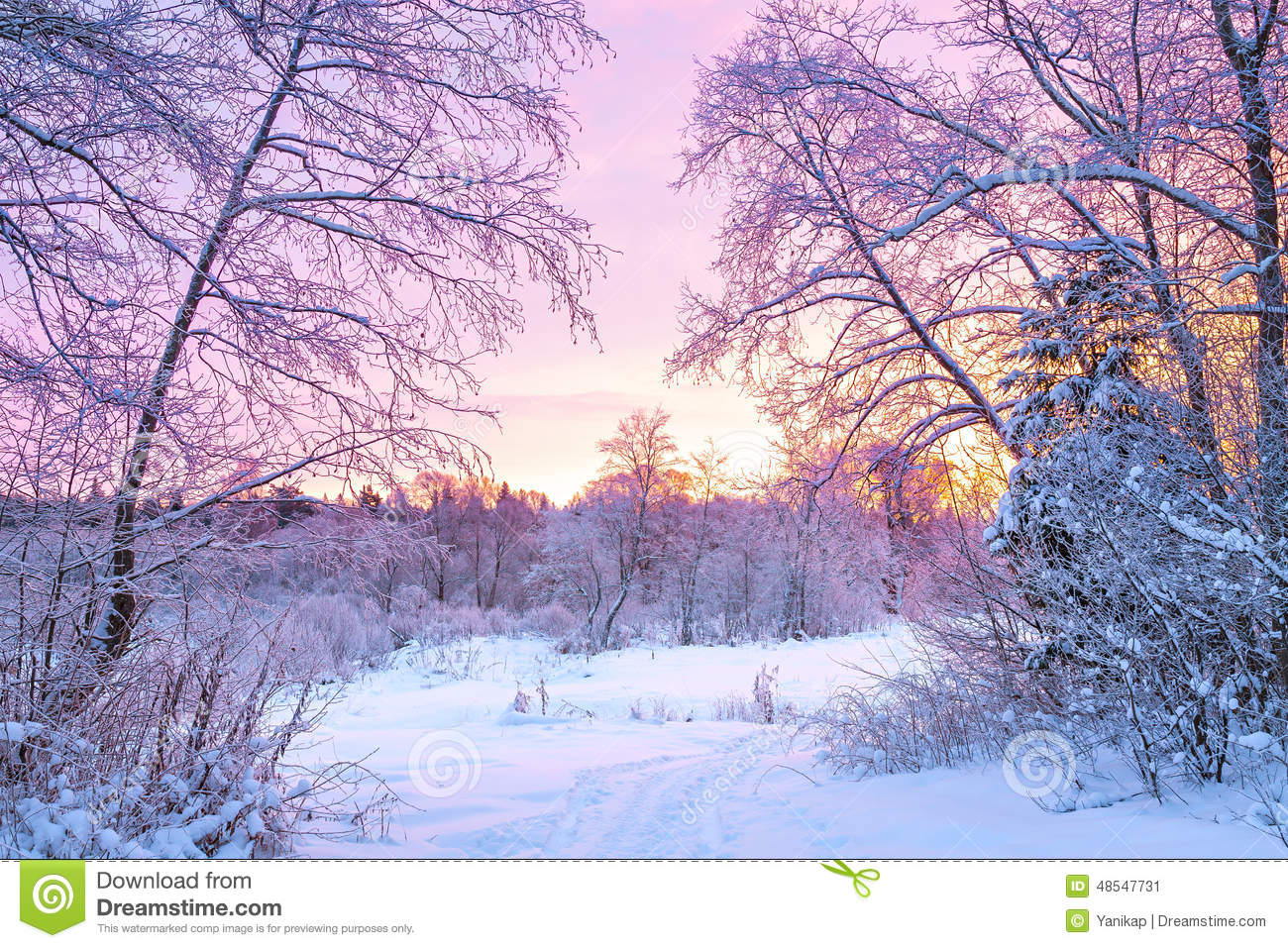 Beautiful Snow Falling Wallpapers Winter Night Landscape With Sunset In The Forest Stock