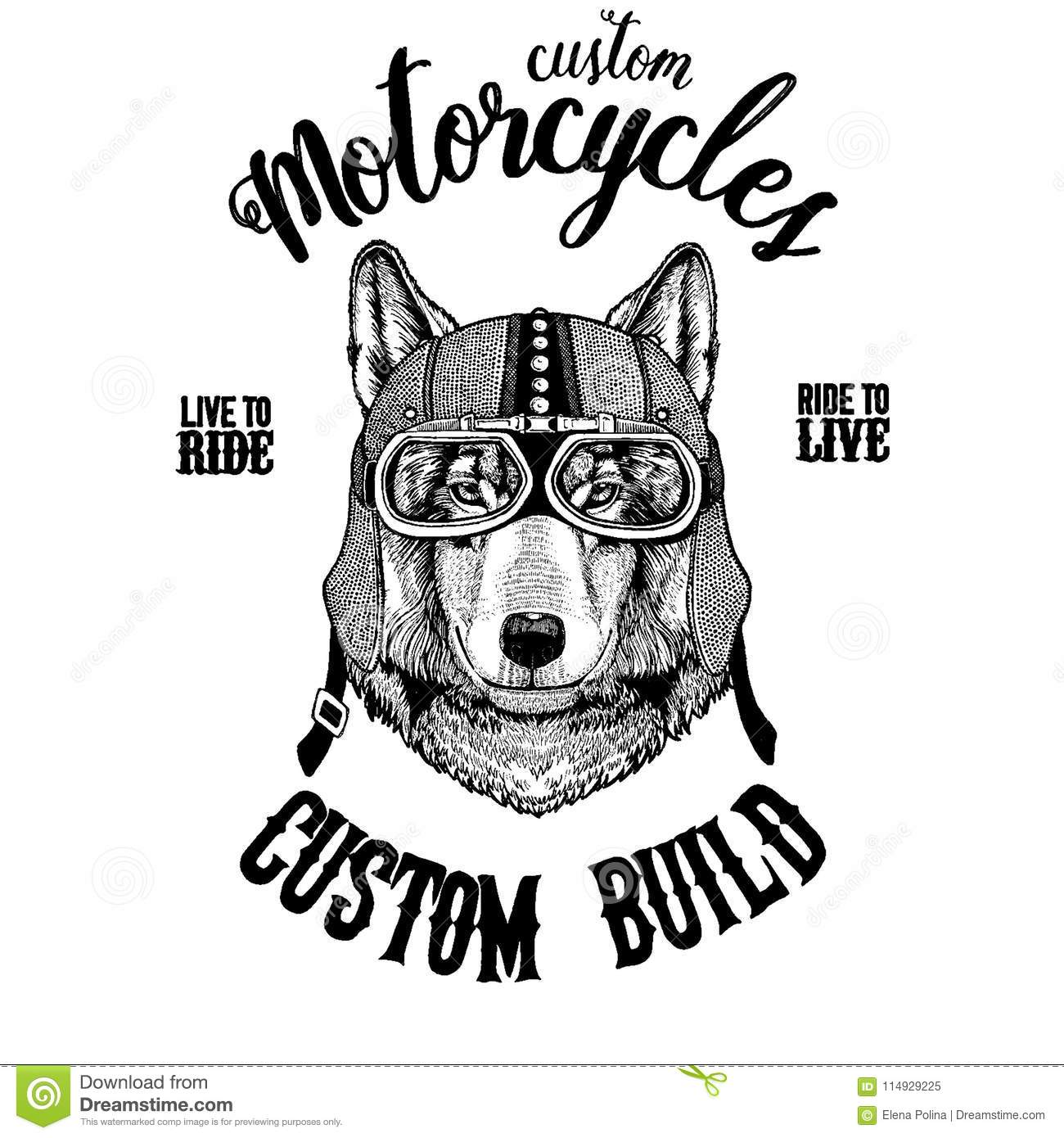 Wolf Dog Biker Motorcycle Animal Hand Drawn Image For