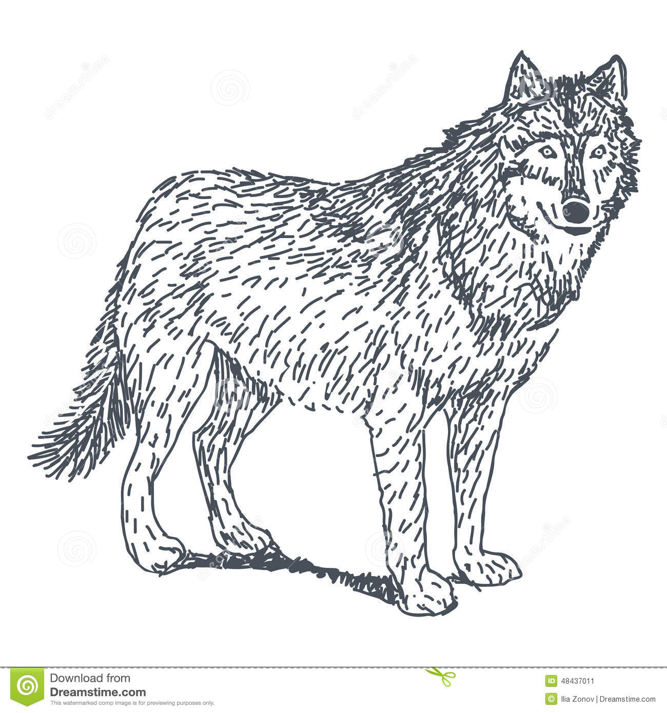 Wolf Drawing Stock Vector