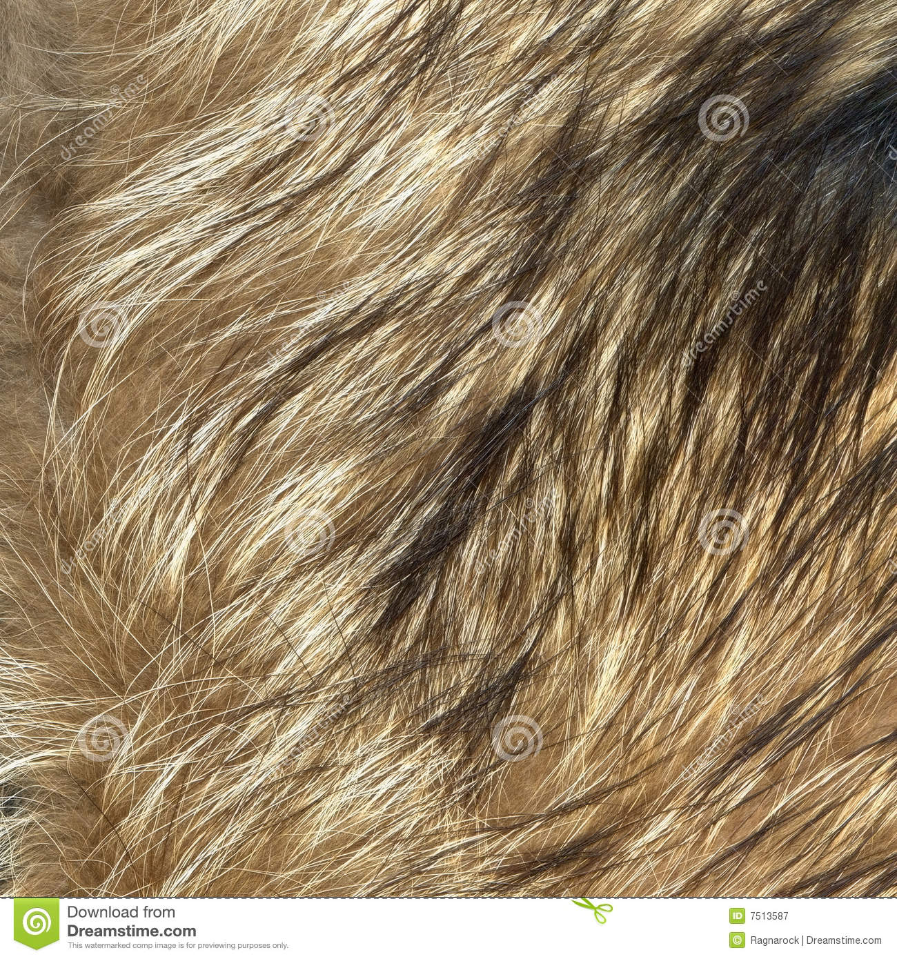 Wolf Fur Texture To Background Stock Image  Image 7513587
