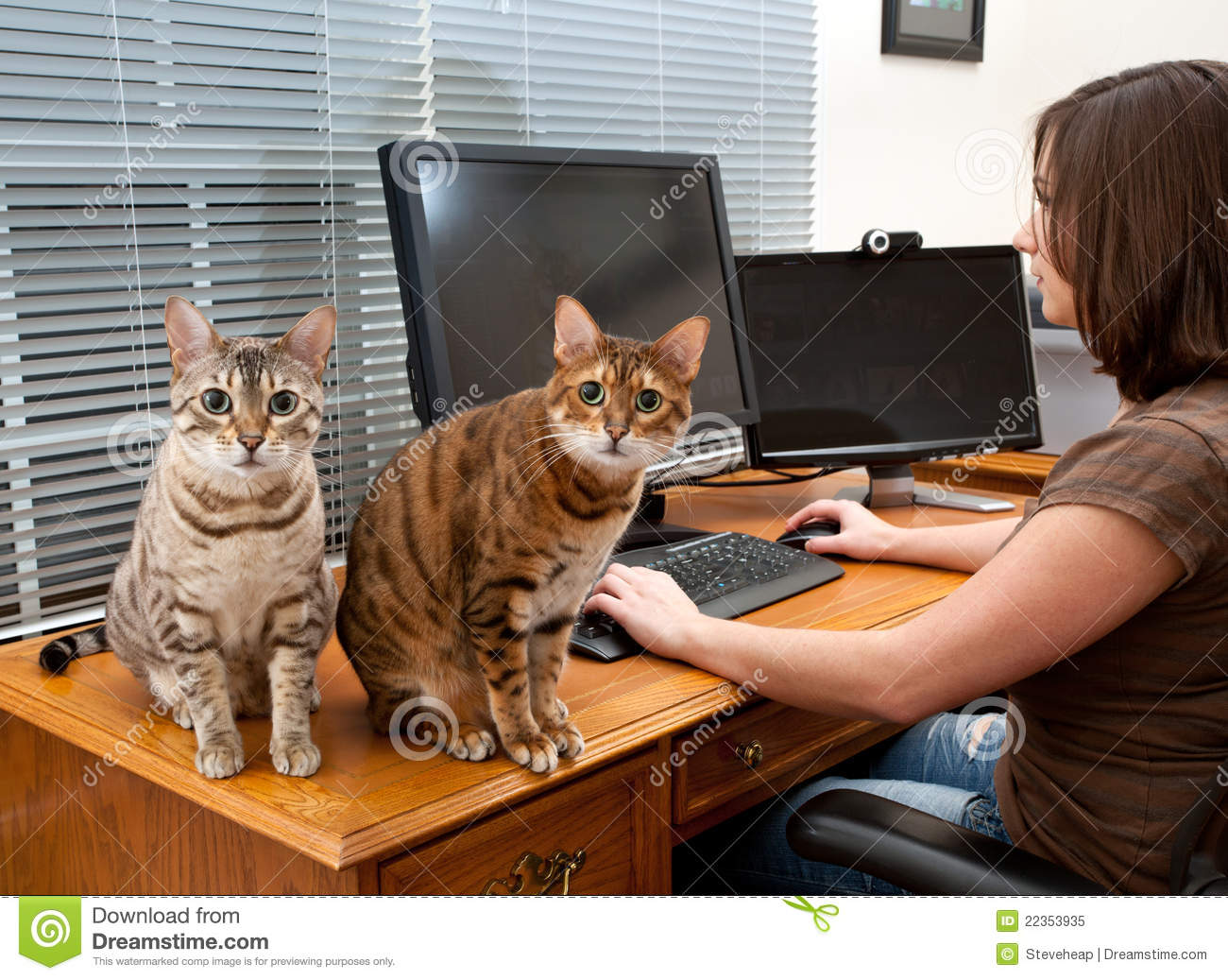 Woman And Cats At Computer Desk Stock Image  Image 22353935