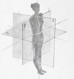 women anatomical planes [ 1065 x 1300 Pixel ]