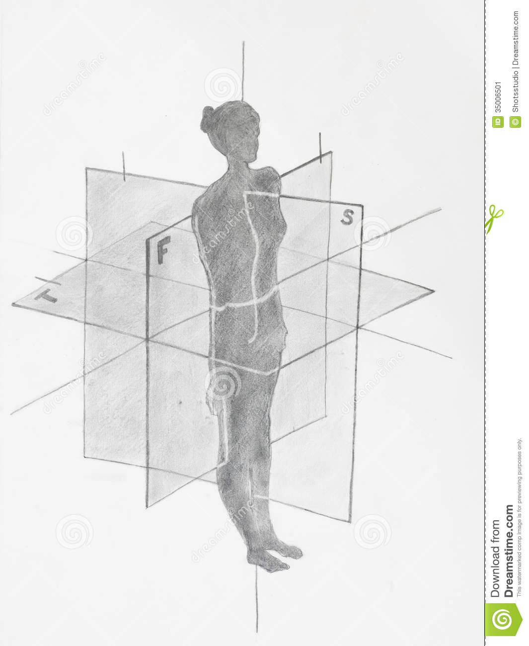 hight resolution of women anatomical planes