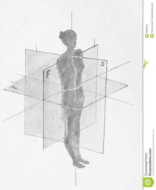small resolution of women anatomical planes