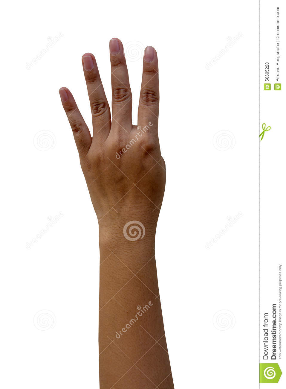 wrist and hand unlabeled diagram what is a schematic circuit 20 blank pictures ideas on meta networks women isolated white background stock