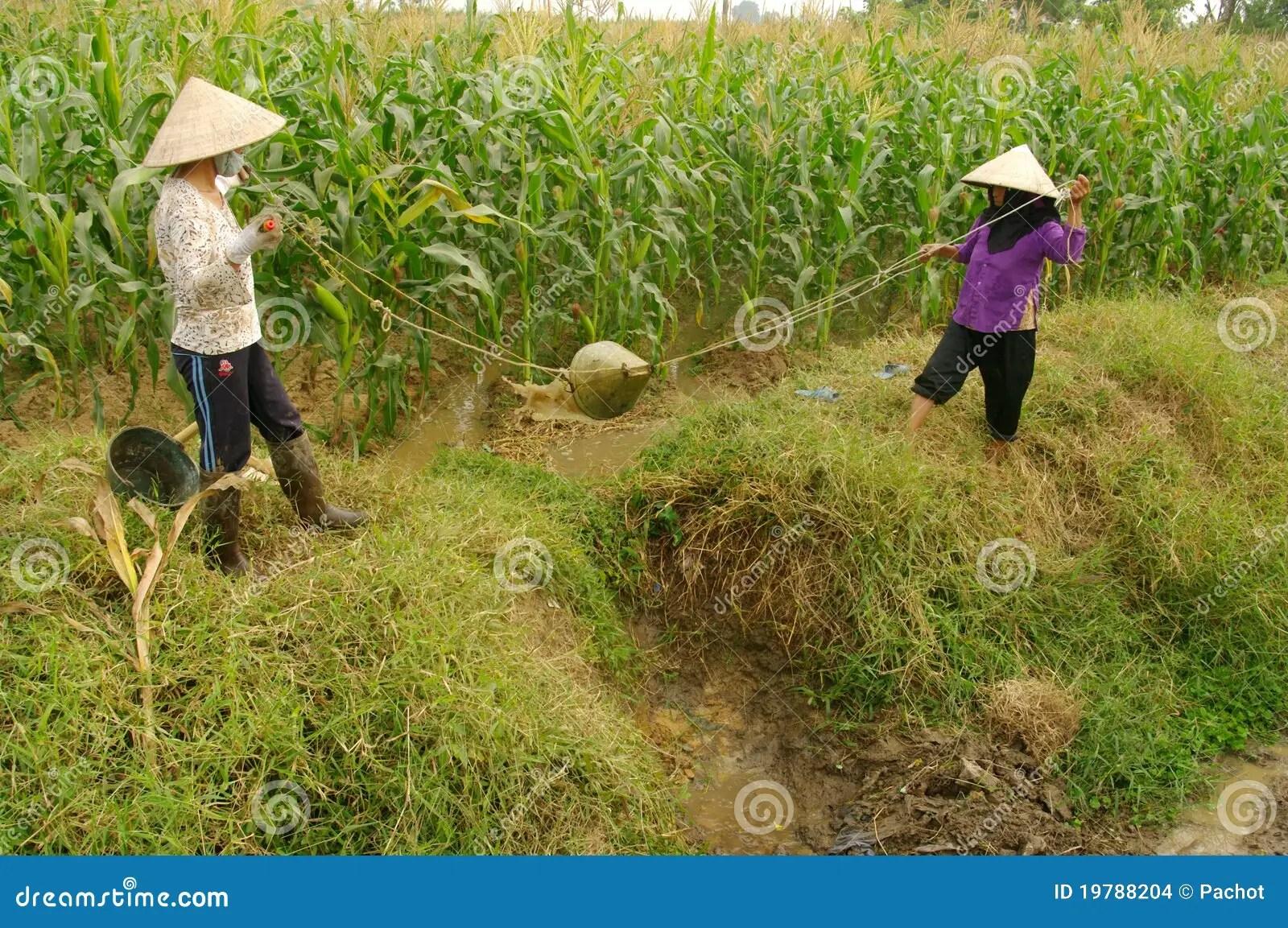 Women Performing Manual Irrigation Editorial Stock Image - Image: 19788204