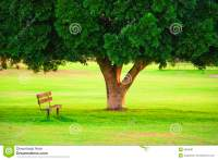 A Wood Chair Under Tree In A Garden Stock Image - Image ...