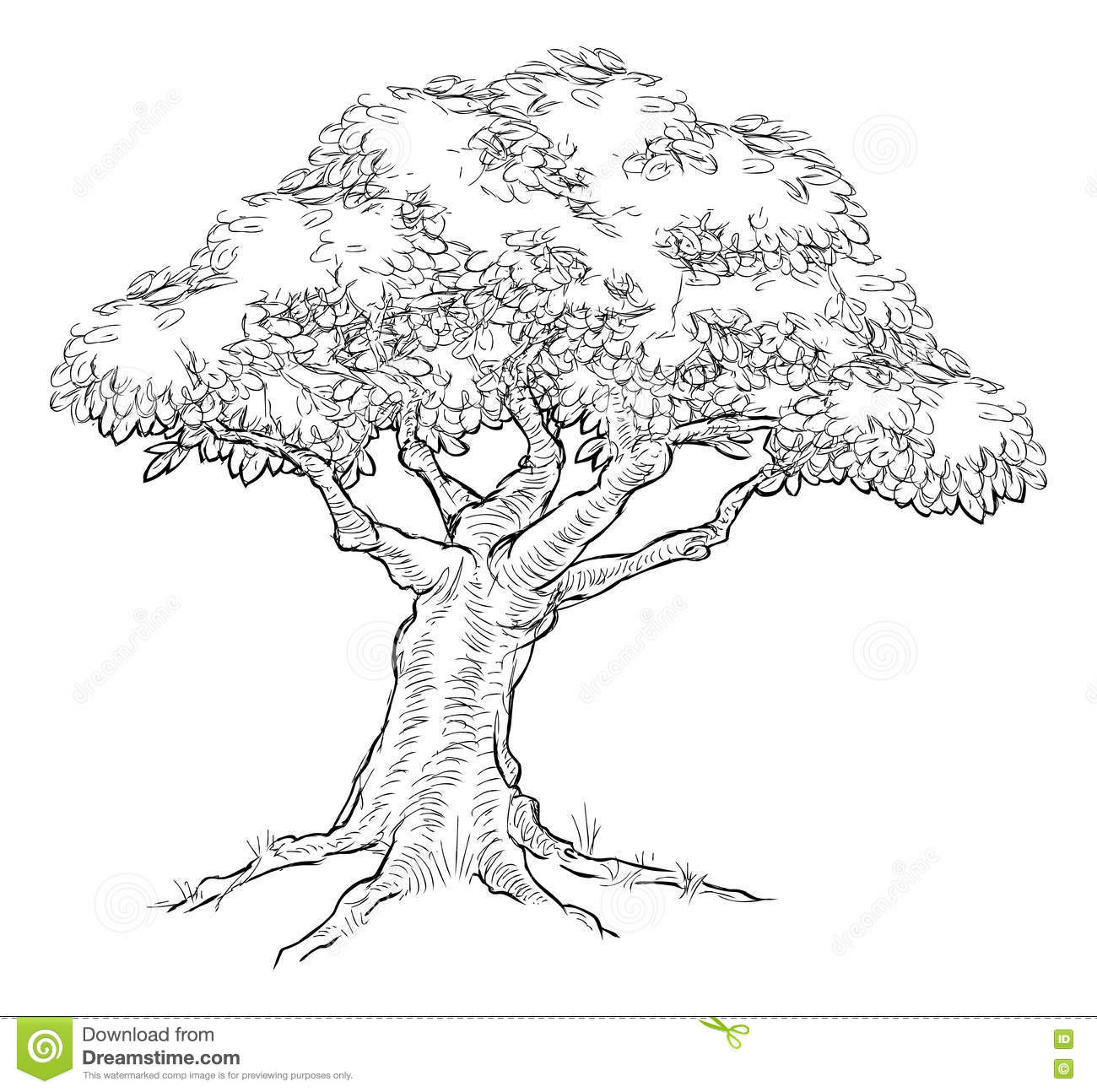 Old Olive Tree Trunk, Roots And Branches Royalty-Free