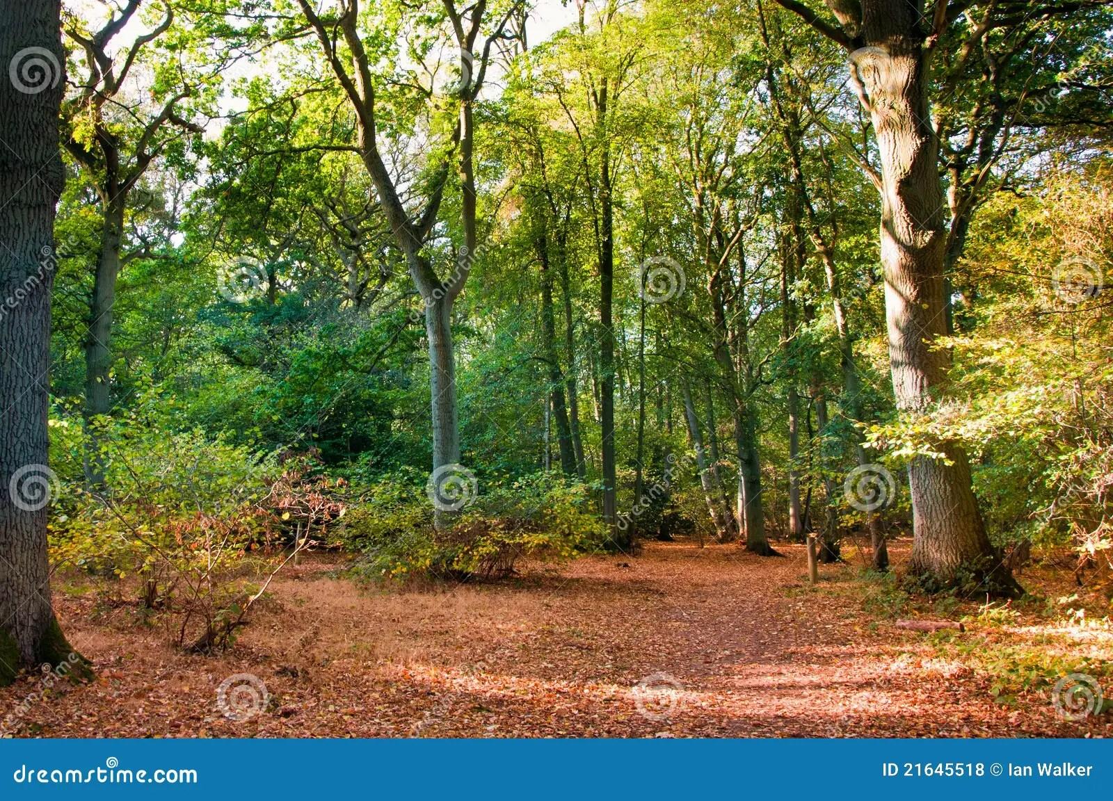 Woodland Scene In Autumn Fall Royalty Free Stock Photos