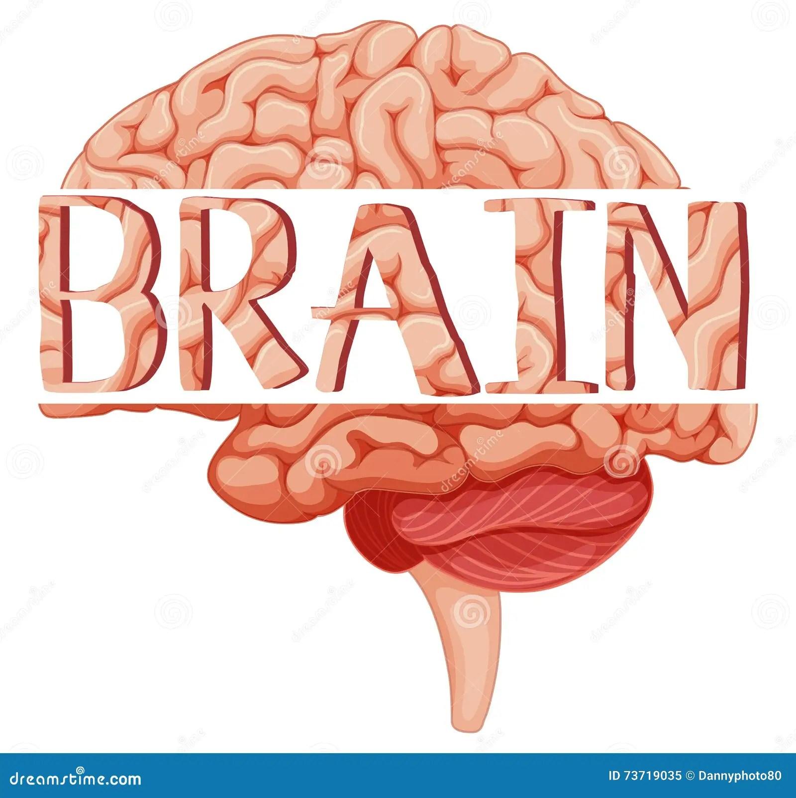 Word Brain On Human Brain Stock Vector Illustration Of